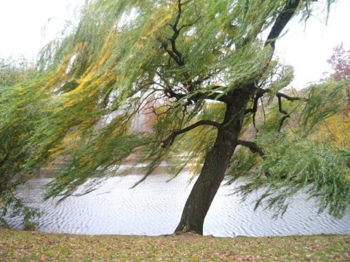 wind-in-the-tree